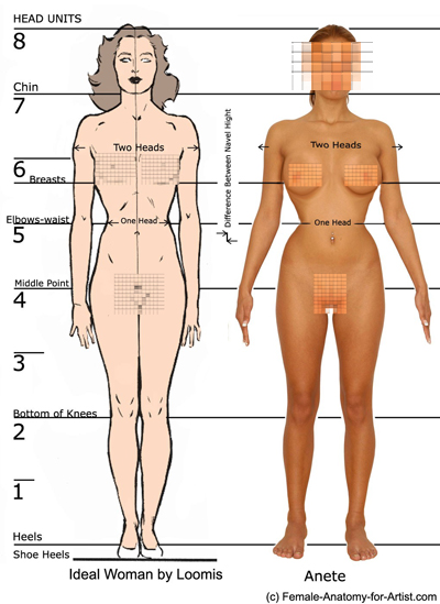 Ideal Female Body mentioned the ideal Waist